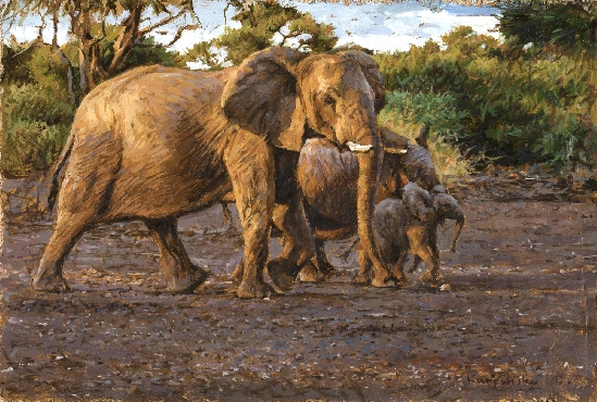 Tony Karpinski - Elephant Family